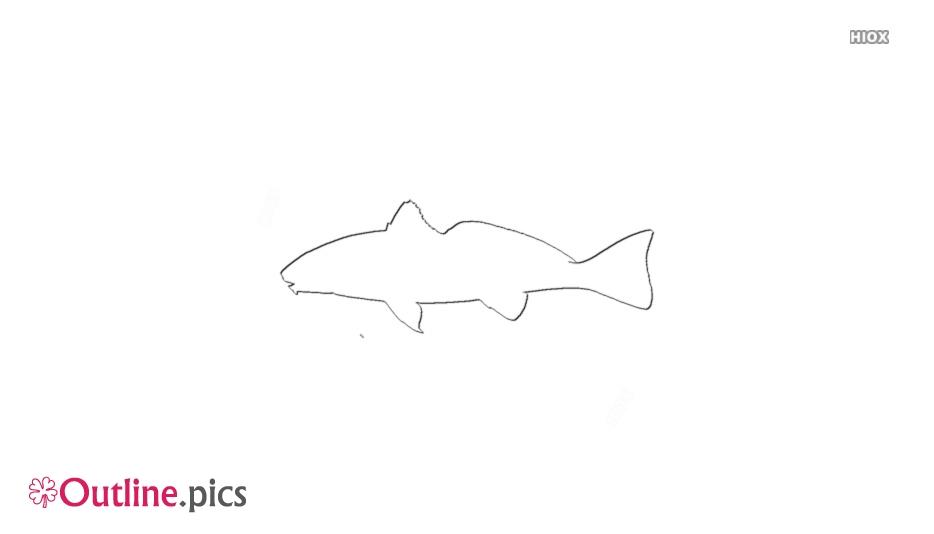 Croaker Fish Outline