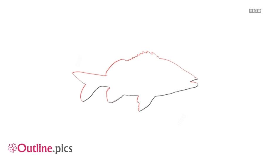 Grunt Fish Outline Free Vector Art