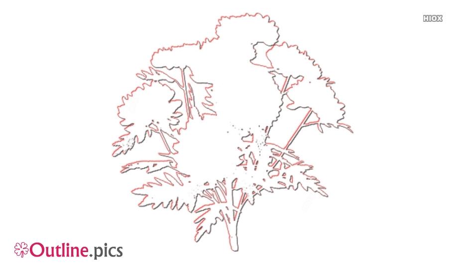 Marigold Flower Outline Art