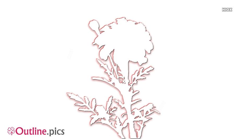 Marigold Flower Outline For Coloring