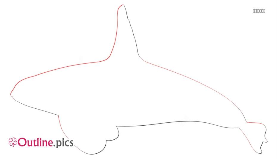 Orca Killer Whale Outline