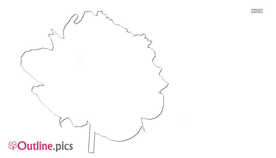 Peonies Flowers Outline Sketch