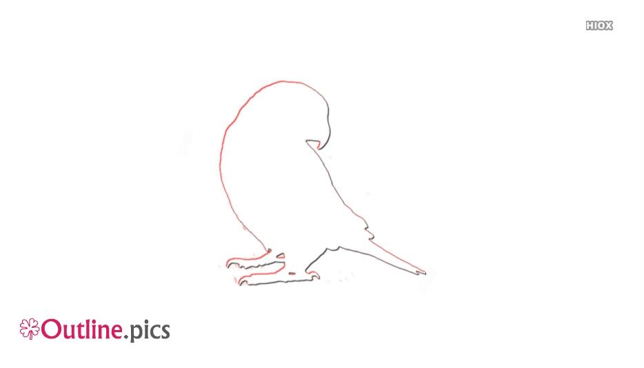 Pet Birds Outline