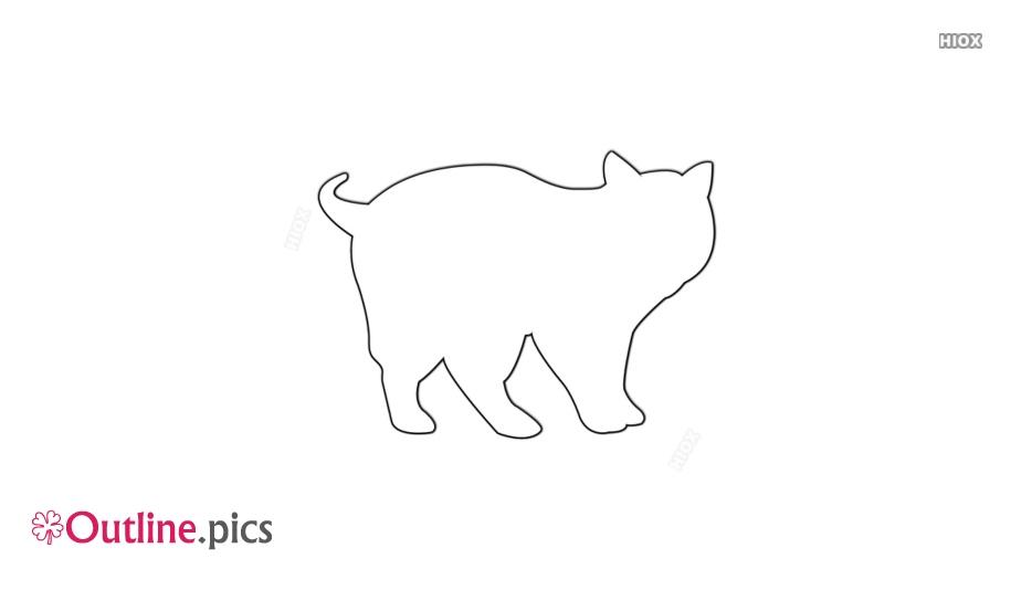 Scottish Fold Cat Outline