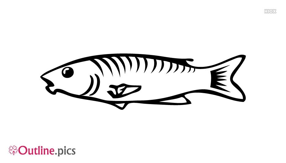 Sea Fish Outline Vector Download