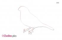 Bird Outline Drawings