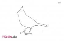 Cardinal Bird Drawing Outline