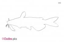 Catfish Drawing