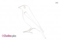 Pelicans Outline Image