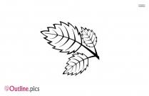 Maple Leaf Outline Drawing