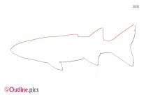 Sheepshead Fish Outline Background