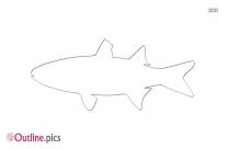 Mullet Fish Outline Illustration