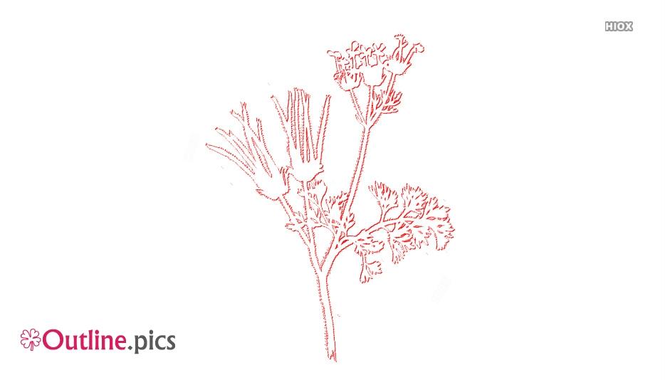 Wildflower Outline Sketch